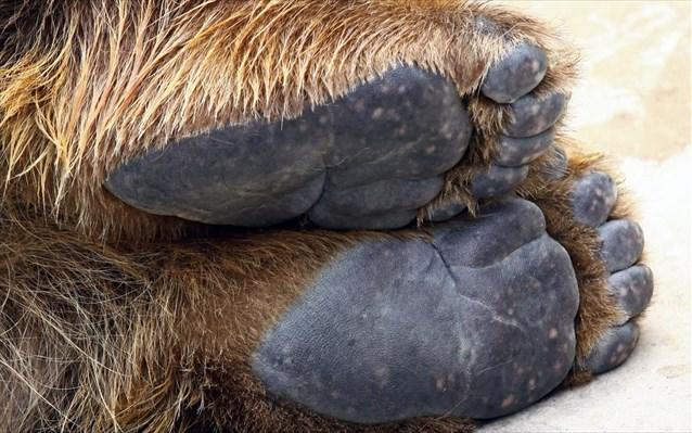 Καστοριά: Αίσιο τέλος στην περιπέτεια μικρής αρκούδας που εγκλωβίστηκε σε αγροικία