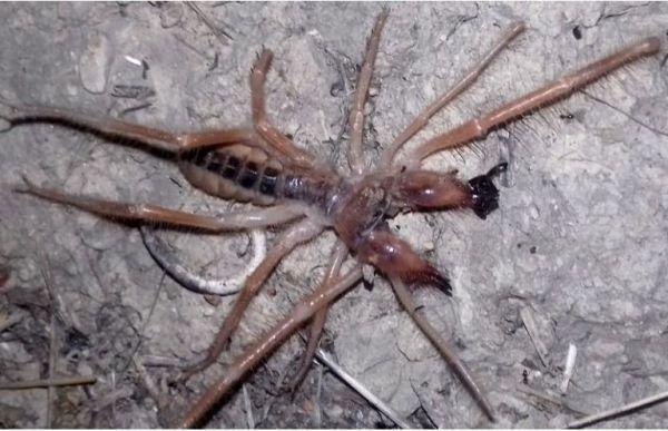 Αράχνη με… εξωγήινη εμφάνιση εντοπίστηκε στα Τρίκαλα