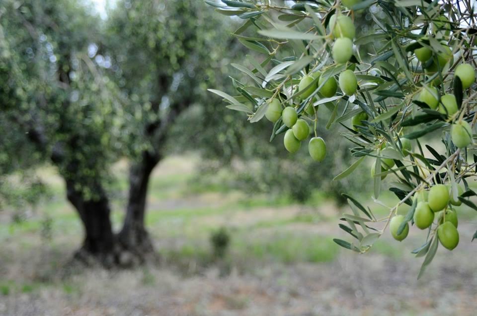 Μήλο, ελιά, ακτινίδιο και γιαούρτι έχουν τη συνταγή για περισσότερες εξαγωγές