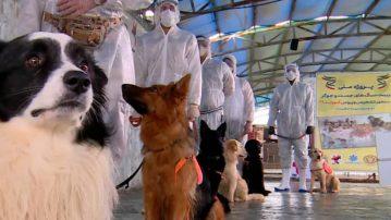 Εκπαιδευμένοι σκύλοι, για την ανίχνευση κρουσμάτων κορωνοιού!