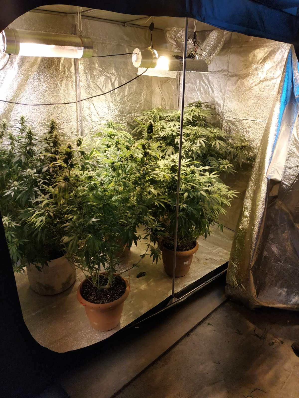 Συνελήφθησαν δύο άτομα σε περιοχή της Φλώρινας για καλλιέργεια και κατοχή ναρκωτικών ουσιών