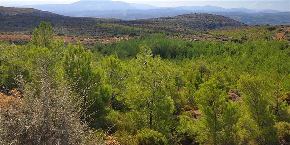 Παράταση για τους δασικούς χάρτες ζητά η ΠΟΜΙΔΑ