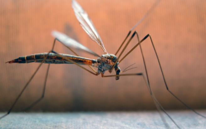 Επιστολές: Τα κουνούπια πανηγυρίζουν στον Γρεβενίτη ποταμό