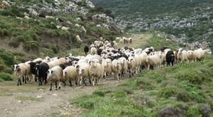 Τέσσερις εστίες καταρροϊκού πυρετού στον Νομό Καστοριάς (φωτογραφίες)