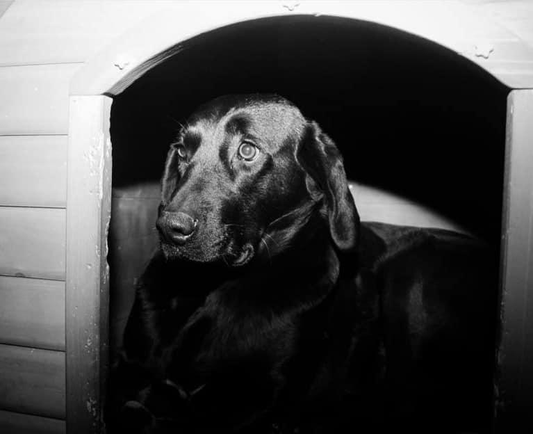Η Φιλοζωική Ομάδα Γρεβενών για το σκύλο σήμα κατατεθέν για την πόλη των Γρεβενών