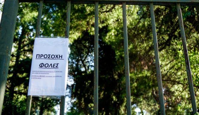 Νέο περιστατικό με φόλες καταγγέλλει ο Αρκτούρος – Έξι νεκρά ζώα