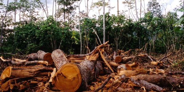 Κοινότητα Καλοχίου: Να μας δοθούν ανταποδοτικά από την ξύλευση