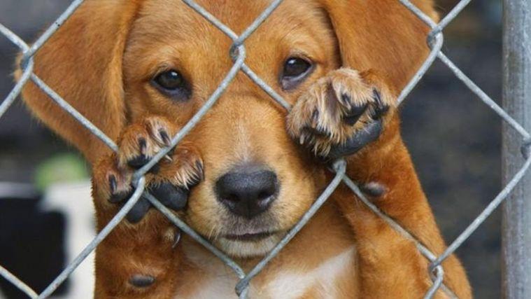 Συλλήψεις και αυτόφωρο για την κακοποίηση ζώων- Τι αναφέρει εγκύκλιος του Αρείου Πάγου