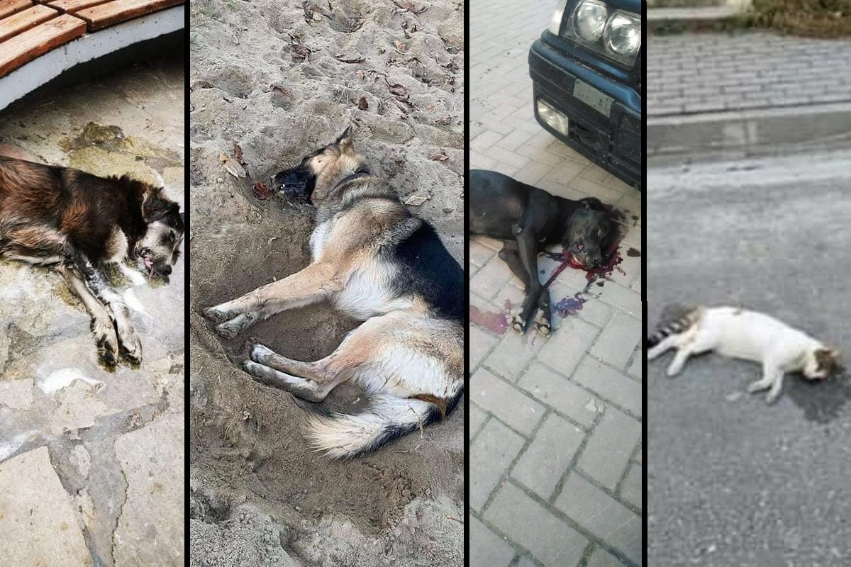 Γρεβενά: Συστηματική δολοφονία ζώων με φόλες