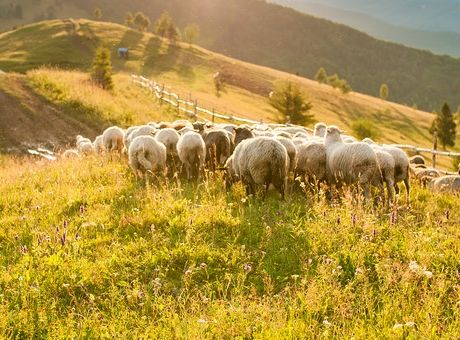 Πρόστιμα για τους ιδιοκτήτες ζώων που προκαλούν αγροτικές φθορές