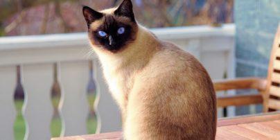 Διαταραχές αποχρωματισμού σε γάτες: Αλλαγή του χρώματος του δέρματος