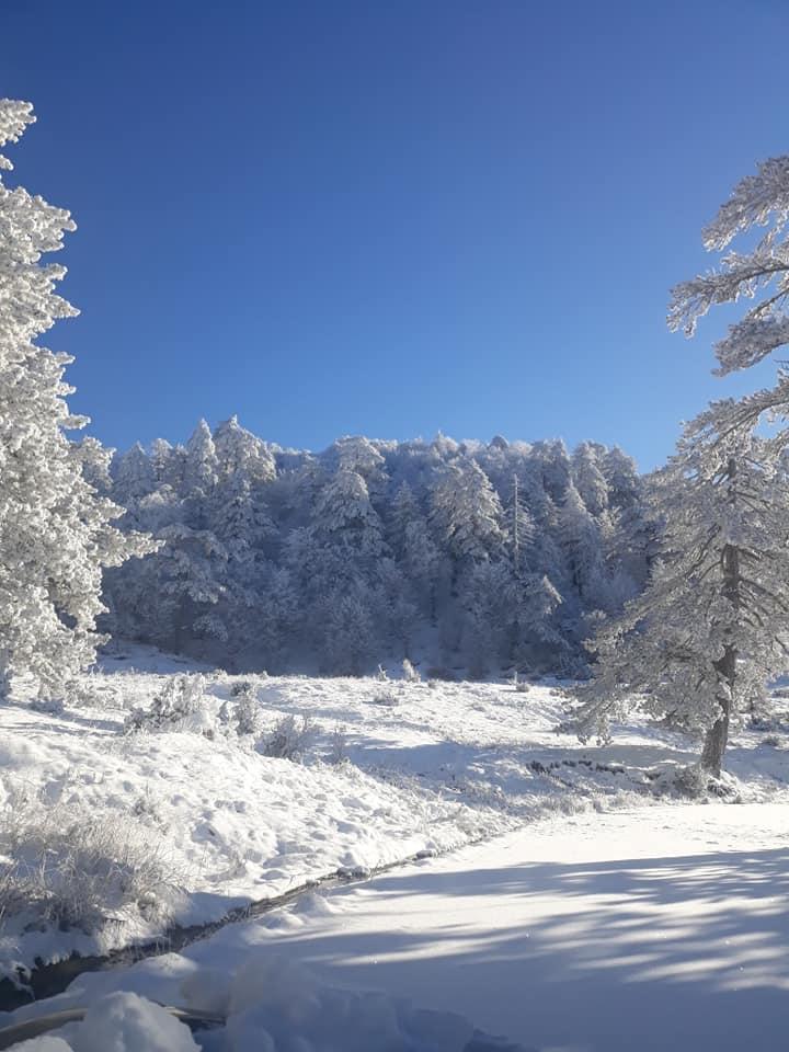Πάγωσαν τα χιόνια στις οξιές και τα πεύκα. Τοπία Αλπικής ομορφιάς στη Φούρκα Κόνιτσας (φωτογραφίες)