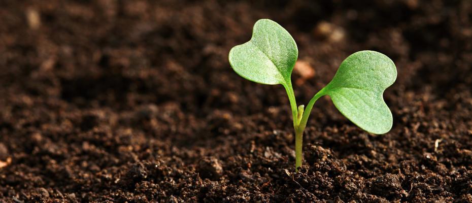 Μπενάκειο Φυτοπαθολογικό Ινστιτούτο: Ένα πρωτοπόρο στη φυτοπαθολογική έρευνα Ινστιτούτο στην Ελλάδα αναπτύσσεται με πόρους της Πολιτικής Συνοχής της ΕΕ