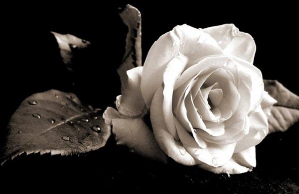 Γρεβενά:Απεβίωσε ο 32χρονος που καταπλακώθηκε απο κλαρκ