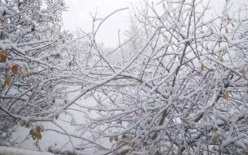 Χιόνισε στα ορεινά των Γρεβενών και τα ελεύθερα άλογα ψάχνουν για τροφή