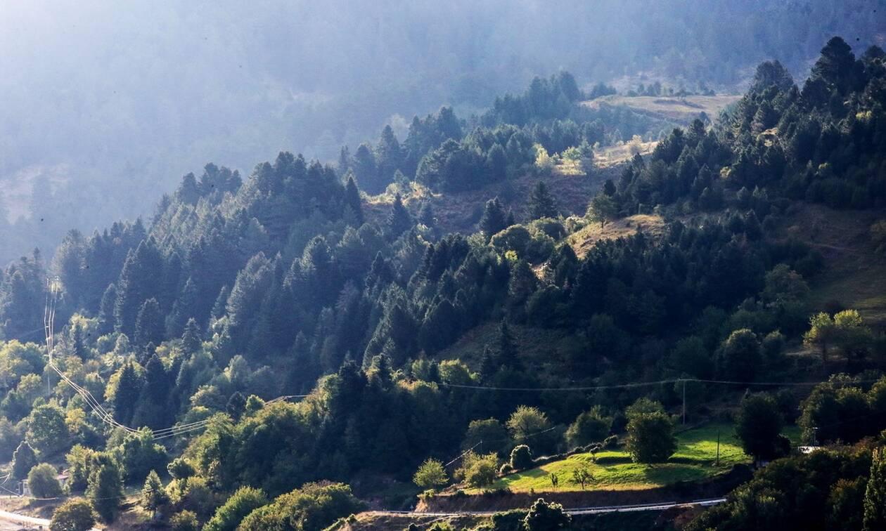 ΟΑΕΔ: Έρχονται 700 προσλήψεις σε Δασικές Υπηρεσίες