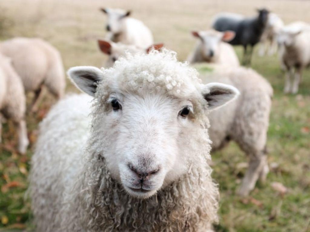 Καστοριά: 25.000 δόσεις εμβολίου για τον Καταρροϊκό Πυρετό