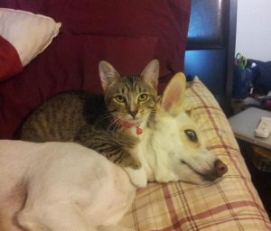 Κορωνοϊός: Εντοπίστηκε για πρώτη φορά Βρετανική μετάλλαξη σε σκύλους και γάτες