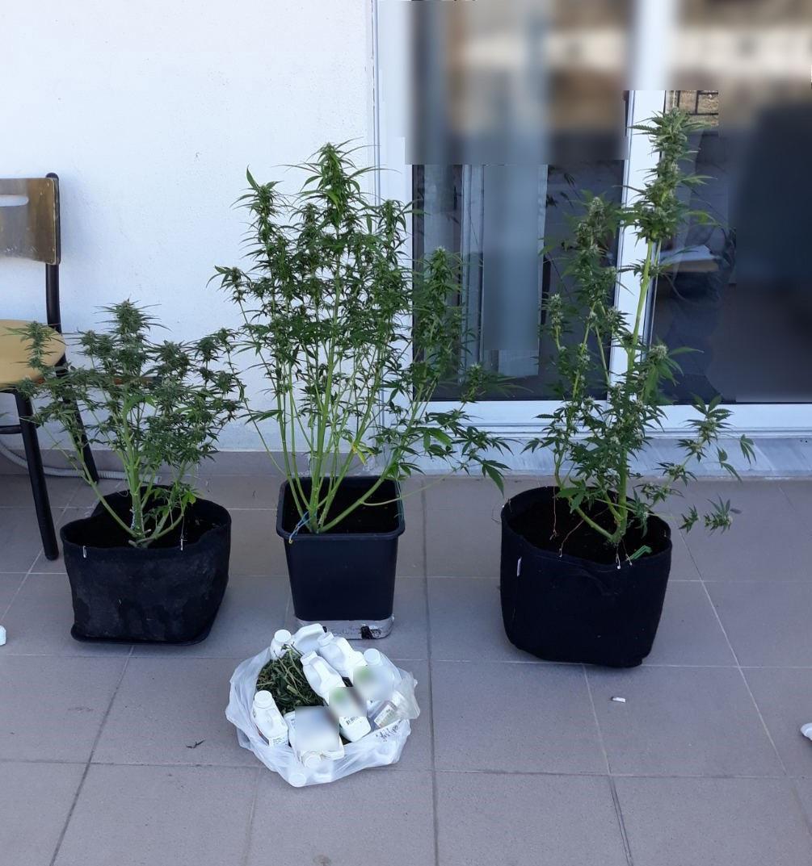 Συνελήφθη 33χρονος στην Φλώρινα για καλλιέργεια δενδρυλλίων κάνναβης