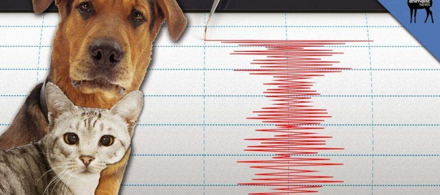 Σεισμός: Μπορούν τα ζώα να τον προβλέψουν; – Τι δείχνει έρευνα