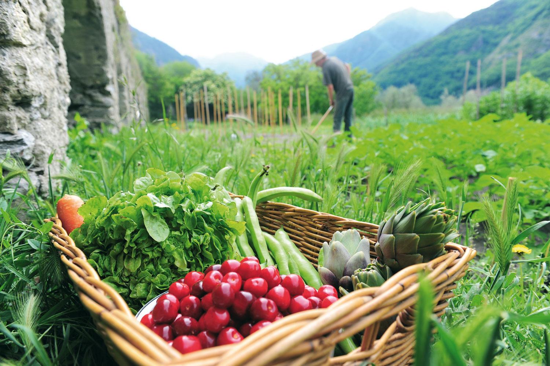 Πώς θα ενισχυθεί η βιολογική γεωργία