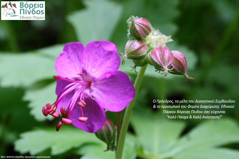 Πασχαλινές ευχές από τον Φορέα Διαχείρισης Εθνικού Πάρκου Βόρειας Πίνδου