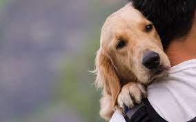 Nομοσχέδιο για τα ζώα συντροφιάς: Οσα πρέπει να γνωρίζετε σε 18 ερωτήσεις -απαντήσεις