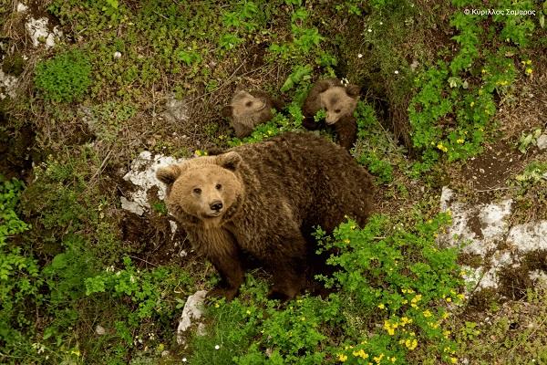 1ο βραβείο για την αρκούδο-οικογένεια του Κύριλλου Σαμαρά (Φώτο)