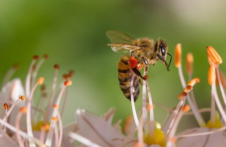 Η μελισσοκομία ευθύνεται για πολλές πυρκαγιές;