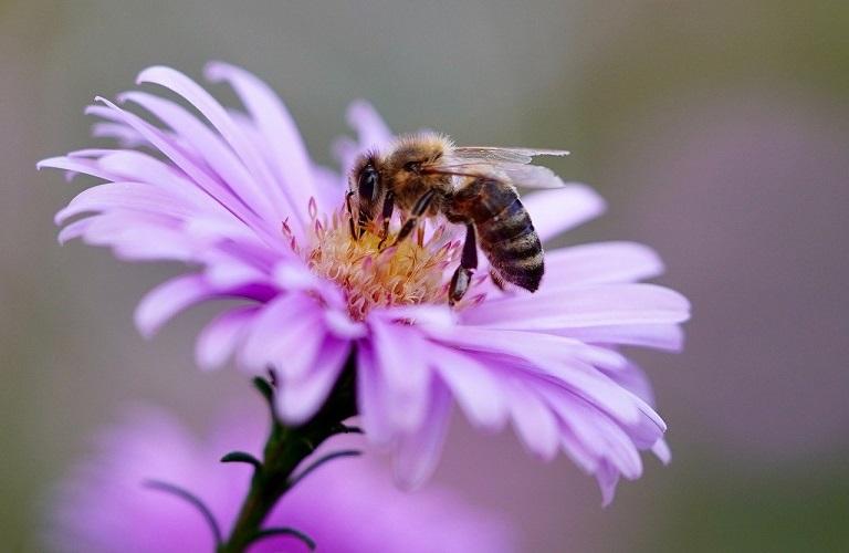 Παγκόσμια Ημέρα Μέλισσας: Αν οι μέλισσες εξαφανιστούν…