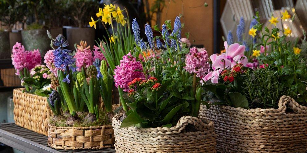 Τα λουλούδια έχουν νοημοσύνη: Θέλουν ομιλίες, συγκεκριμένη θέση και κλασική μουσική- Ανθοπώλης εξηγεί