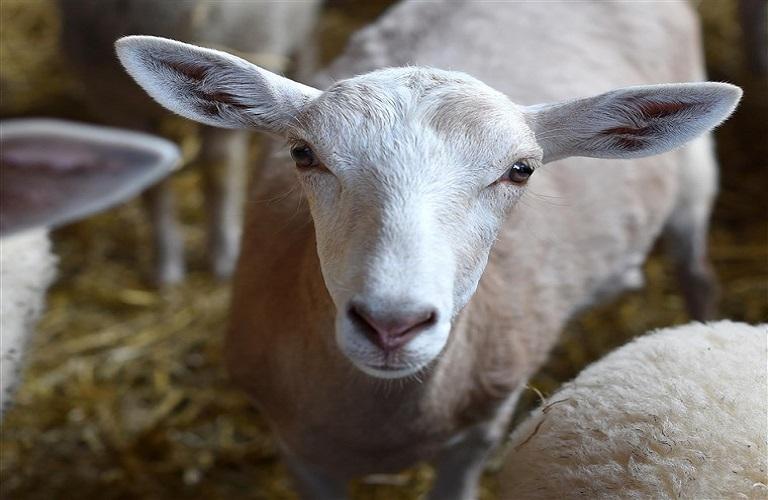 Καστοριά: Εμβολιασμοί για τον Μελιταίο πυρετό