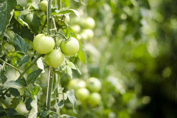 Δυτική Μακεδονία: Ξεκίνησαν οι τροποποιήσεις στις βιολογικές καλλιέργειες