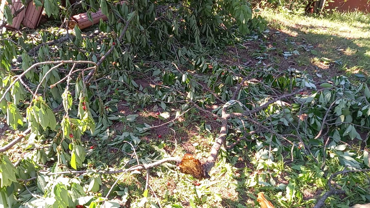 Αρκούδες καταστρέφουν κερασιές και μελίσσια στη Φλώρινα