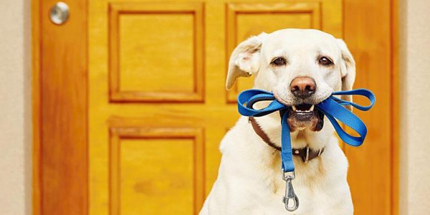 Ζώα συντροφιάς: Μετά τις αντιδράσεις, μη υποχρεωτική η στείρωση