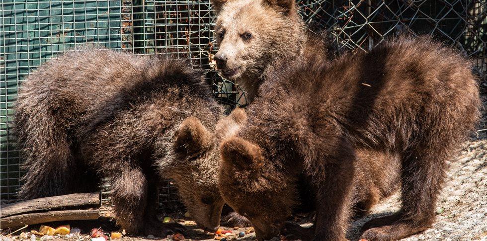 Ο «Αρκτούρος» δίνει μία δεύτερη ευκαιρία στη φύση σε έξι ορφανά άγρια ζώα
