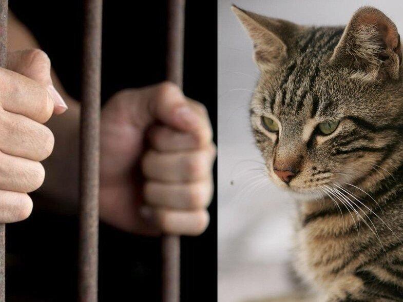 Η πρώτη προφυλάκιση για ζωοκτονία στην Ελλάδα: Στη φυλακή 23χρονος που σκότωσε γάτα