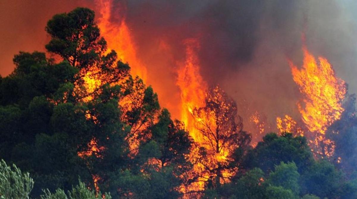 Σκληρή μάχη της Πυροσβεστικής Υπηρεσίας Γρεβενών για να περιορίσουν την πυρκαγιά μεταξύ των Κοινοτήτων Καρπερού και Φελλίου