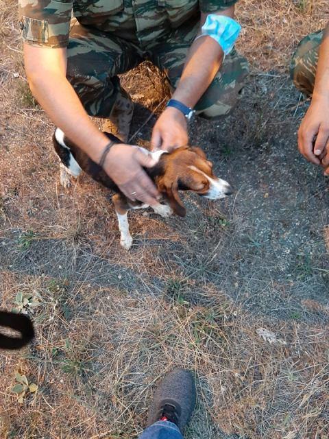 Απεγκλωβισμός δύο σκυλιών στο φράγμα Τριανταφυλλιάς (Φωτογραφίες)