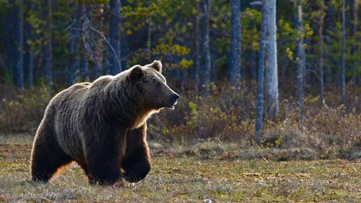 Καστοριά: Τροχαίο με θύμα μια μικρή αρκούδα