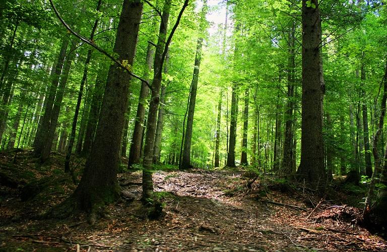 Ανοίγει ο δρόμος για την ανάρτηση των δασικών χαρτών