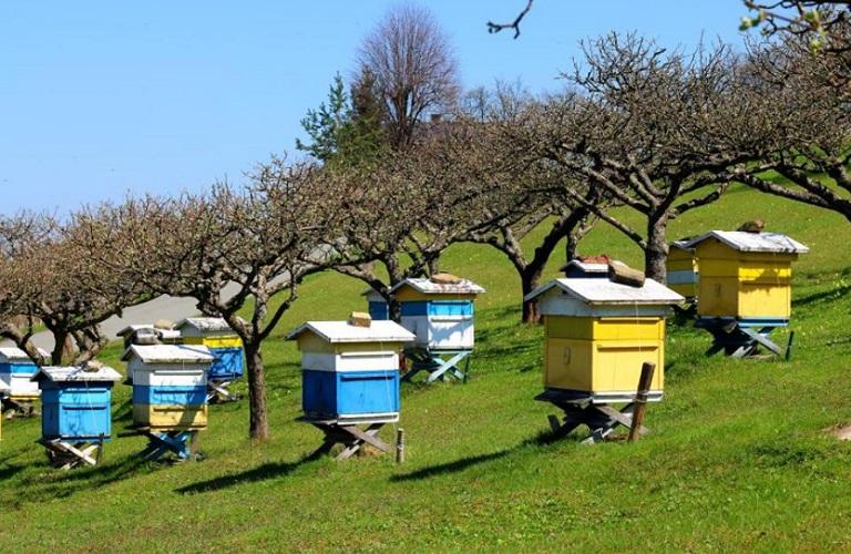 Μελισσοκομικό μητρώο –  Έως 20/10 οι δηλώσεις κατεχόμενων κυψελών