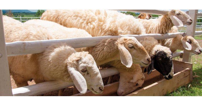 H ανομβρία συνεχίζει να πλήττει την κτηνοτροφία των Γρεβενών. Τα μισά χωριά του Δήμου με προβλήματα υδροδότησης