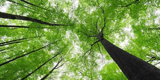 Επιστολές: Τα δάση…