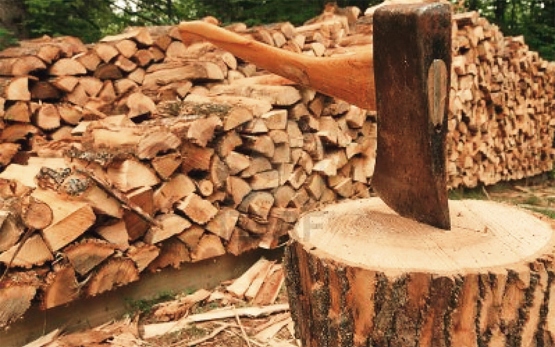 Συνεχίζονται οι ανακρίσεις για την ξύλευση του δάσους της Κοινότητας Αηδονιών Γρεβενών με διάταξη της Εισαγγελίας Εφετών Δυτικής Μακεδονίας. Ζητείται να αιτιολογηθεί το έλλειμα 3.000 τόνων δρυός (αξίας 300.000 ευρώ)