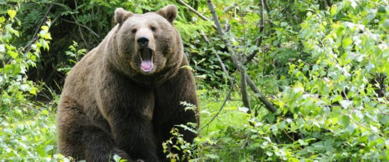 Κοζάνη: Αρκούδα επιτέθηκε σε κυνηγό – Γλύτωσε από… θαύμα