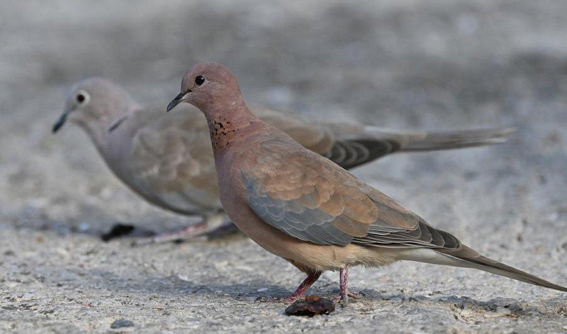Ανακαλύφθηκε στην Ελλάδα νέο αναπαραγόμενο είδος πτηνού